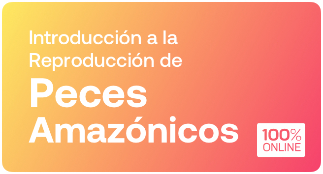 Curso de Reproducción de Peces Amazónicos
